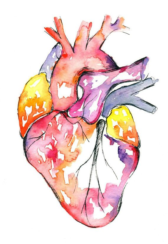 Medical Anatomy Art- Watercolour Heart Painting - LARGE sizes ...