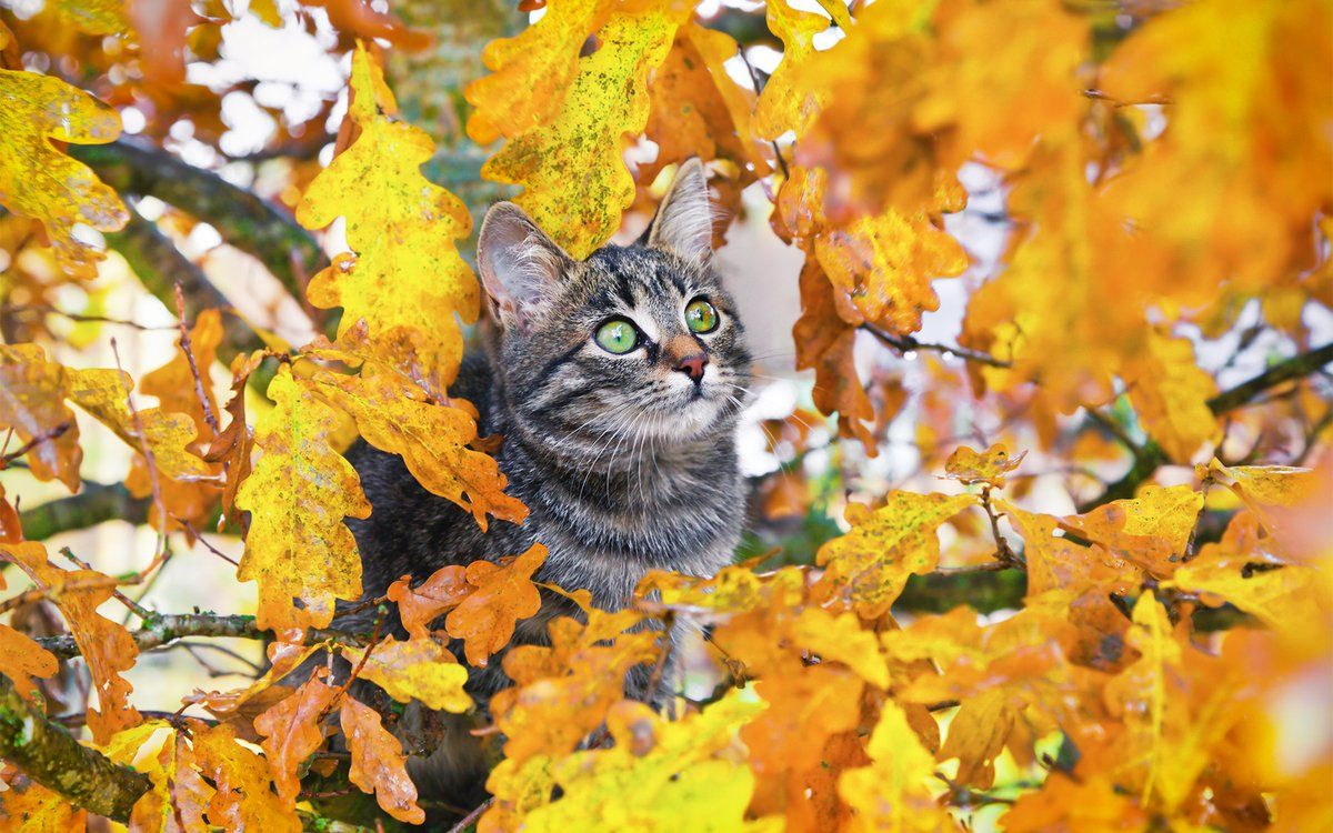 Need More Aww In Your Autumn Download 16 Pictures Of Animals Enjoying The Fall Foliage In This Windows Theme Cuten Up Cat Colors Orange Tabby Cats Animals