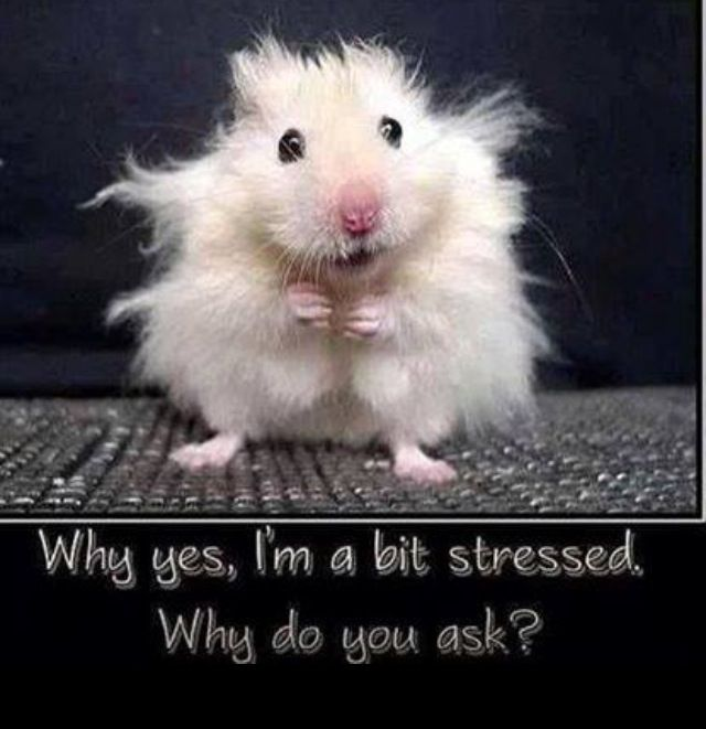 Hamsters get stressed too