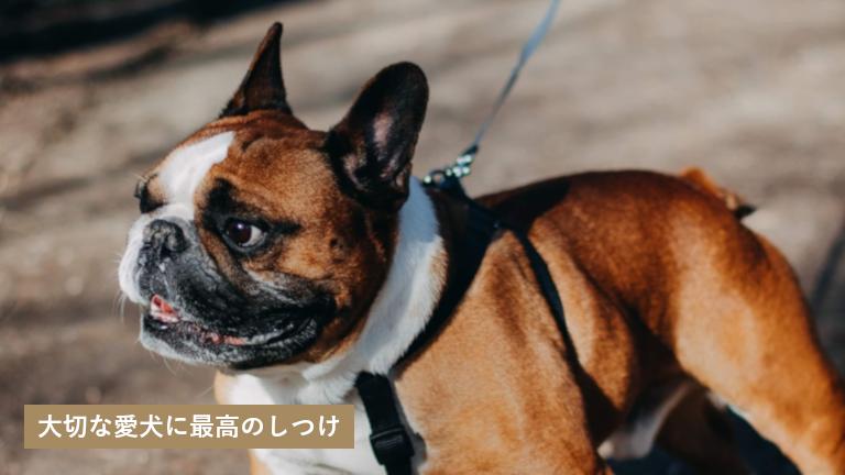 松尾愛犬訓練学校 熊本県宇土市 犬のしつけ教室おすすめ わんパラ 犬のしつけ 犬 ペット