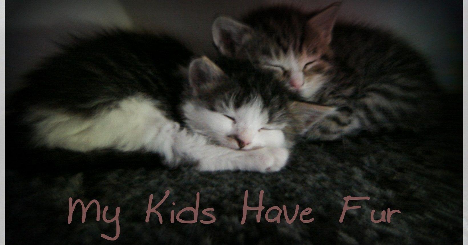 Google themes meme - Furkids Tabby Feline Furkids Cats Feline Kittens Cats Friends Adorable Adorable Furry Babies Nap Furry Babies Theme Kittens