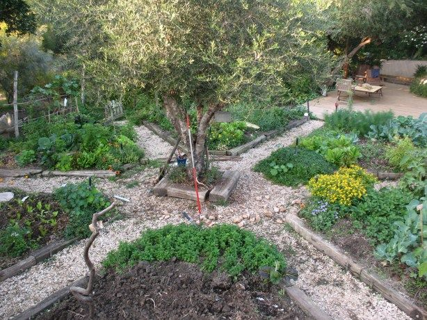 This Blogger Sez The Vegetable Garden Is Made Up Of Six Triangles In Shape A Mandala With An Olive Tree Middle And Seat Around