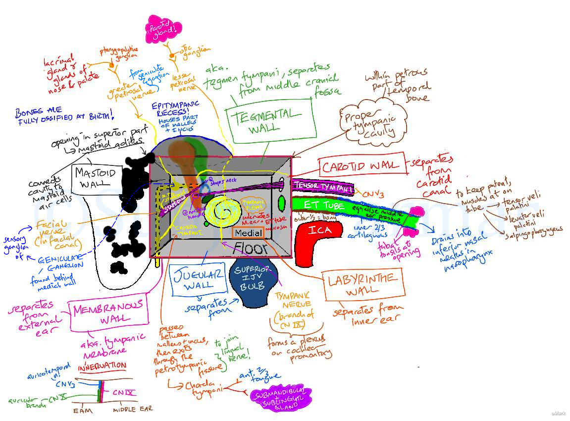 Anatomical Relations Of The Middle Ear Visual Mnemonic
