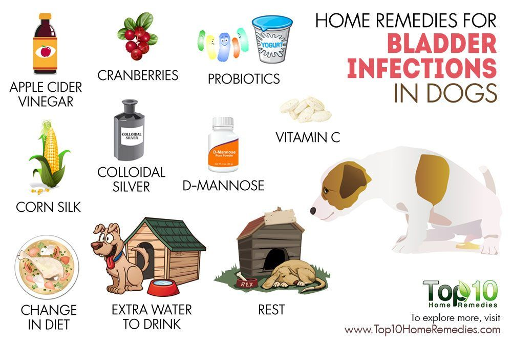 Home Remedies For Bladder Infection In Dogs Http Pets Ok Com