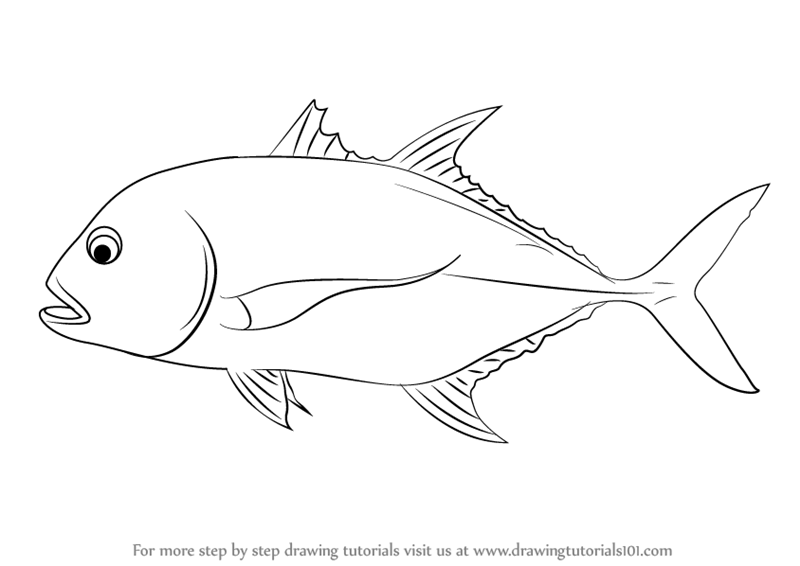How To Draw A Giant Trevally Drawingtutorials101 Com Fish Drawings Drawings Fish Art
