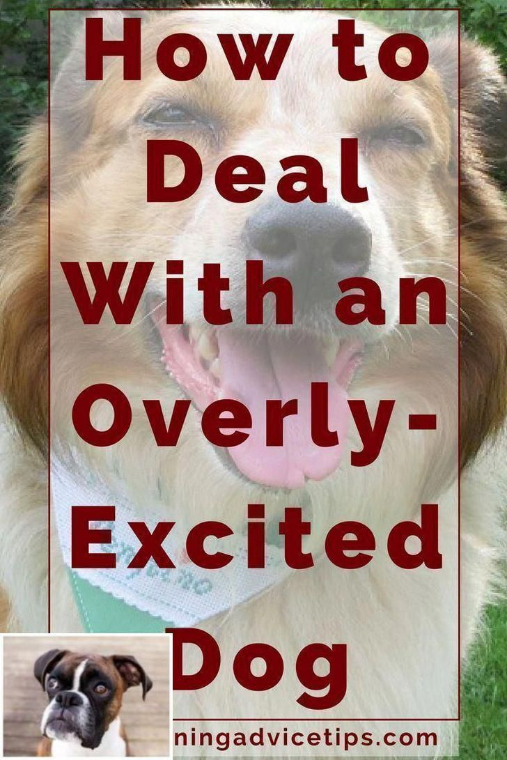Important Guidelines For Dog Training See Obedience Ideas