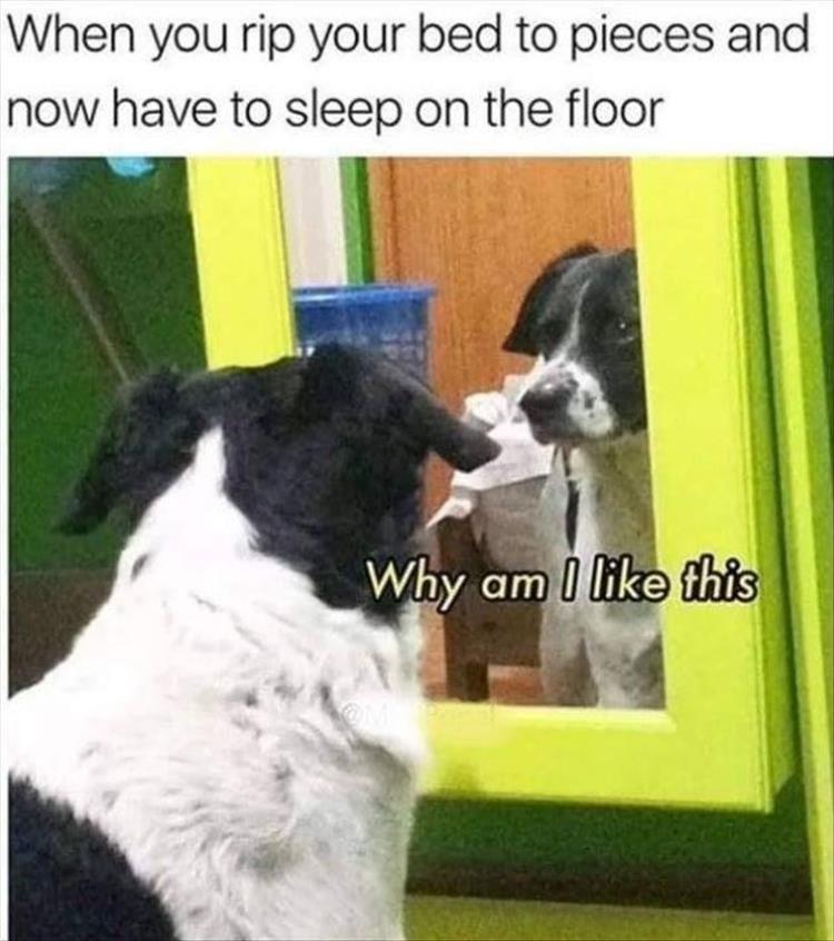 30 Clean Animal Memes Of 2020 To Make You Laugh Animal Memes Clean Funny Dog Memes Funny Animal Memes