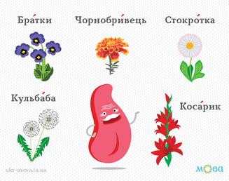 Квіти українською мовою. Частина 2