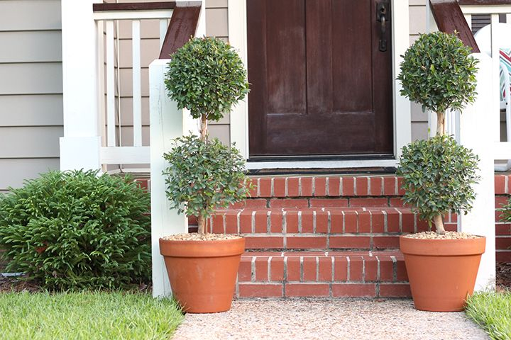 How To Plant A Topiary Tree In A Terracotta Planter Trees