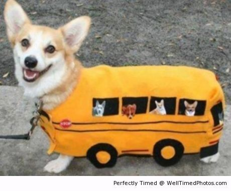 Bus Costume For Dog The Dog Is The New Bus Driver For Today He