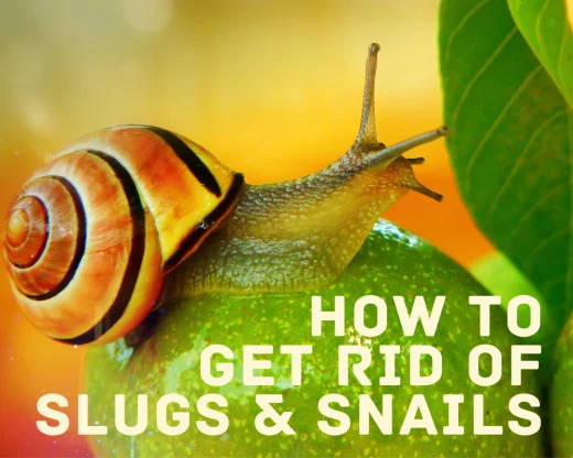 How To Get Rid Of Slugs In Your Kitchen