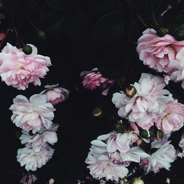 flowers | Tumblr | Flower Power | Pinterest | Flower power