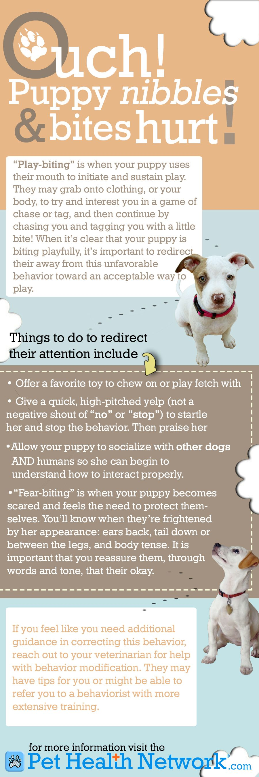 Training Help For You And Your Dog Dog Behavior Puppy Biting