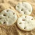 GF Sand Dollar Cookies  adapted from Little Corner of Mine    2 1/2 cups tapioca flour/starch  1 egg yolk  1 cup powdered sugar  1 tablespoon butter, melted  1/2 cup (120 ml) coconut milk/cream