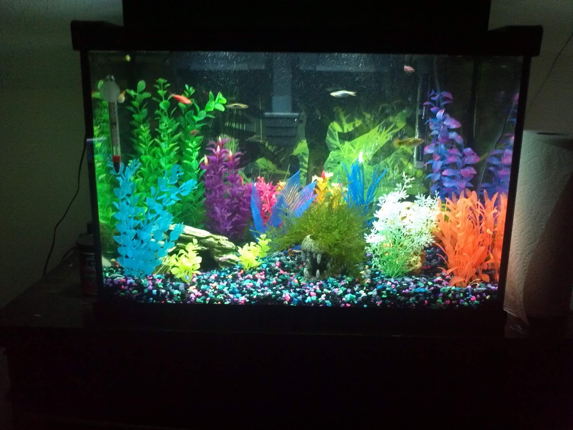 glofish aquarium setup google search glofish