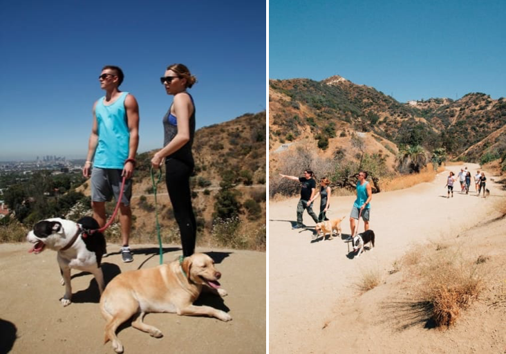 Hike Runyon Canyon With Rescue Dogs Los Angeles California Rescue Dogs Dogs Up For Adoption Animal Doctor