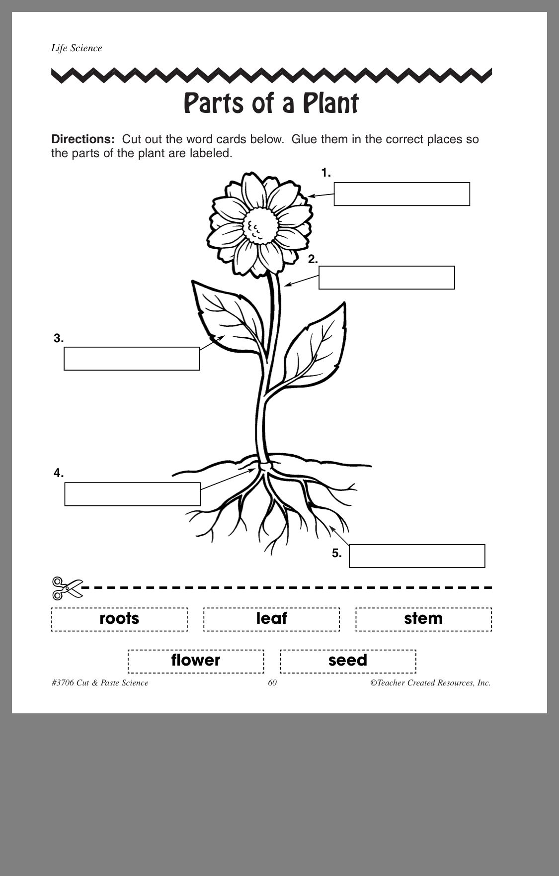 Pin By Renisha Tixey On Science Worksheets With Images