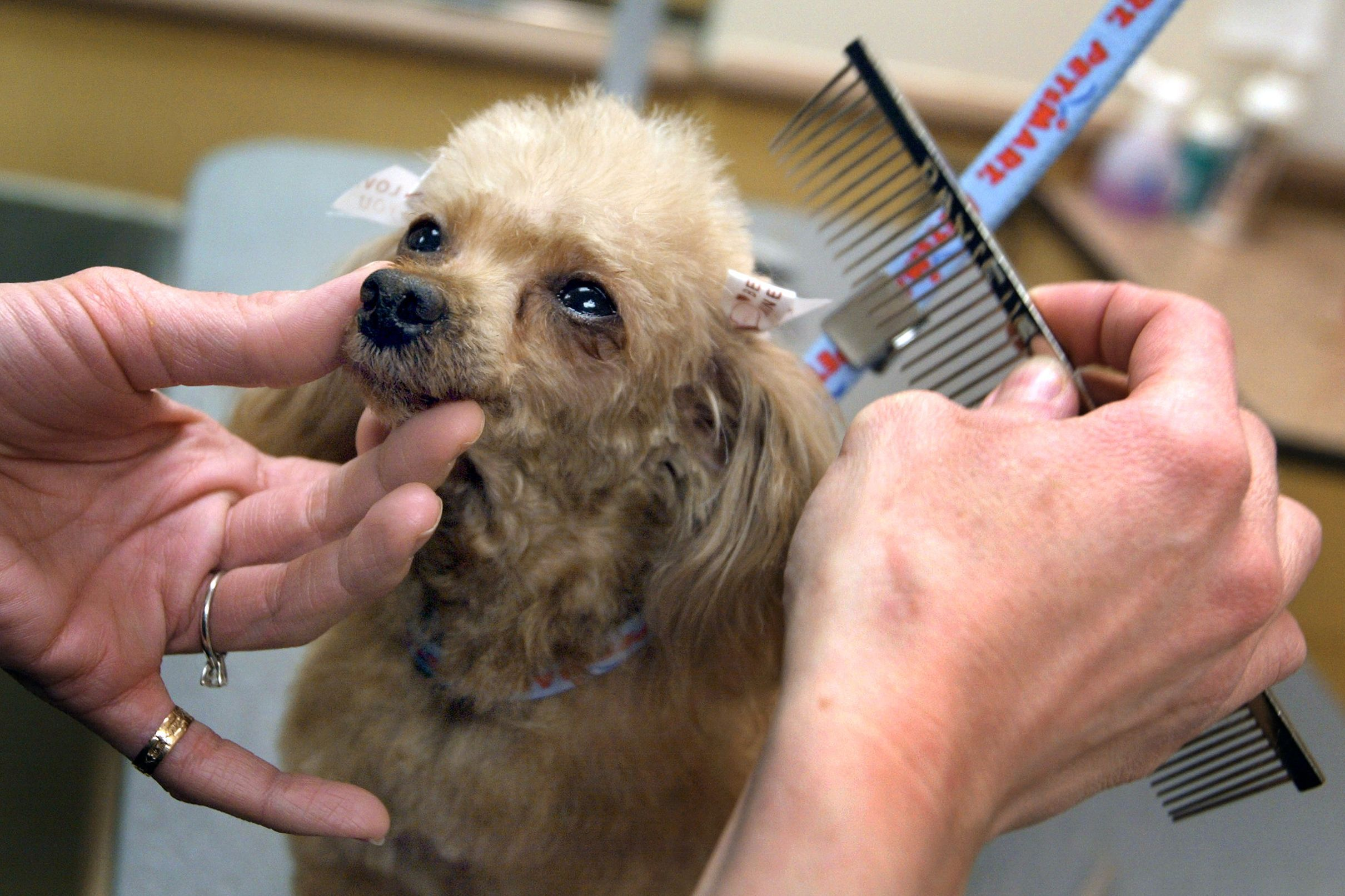 Petsmart Is Acquiring Chewy Com For 3 35 Billion In The Largest E Commerce Acquisition Ever With Images Dog Died Petsmart Grooming Dog Care
