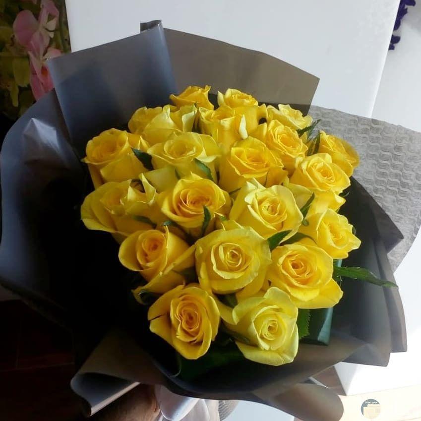 سكرابز ورد اصفر بحث Google Free Collage Rose Flowers