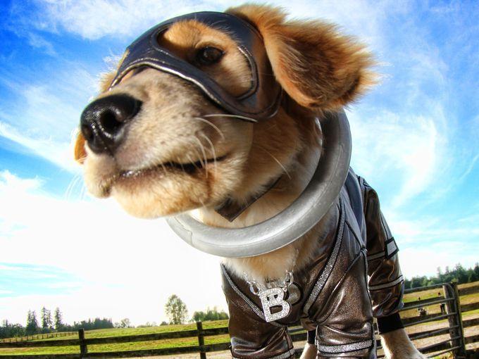 B Dawg S Super Power Is Super Stretch Air Bud Disney Pixar