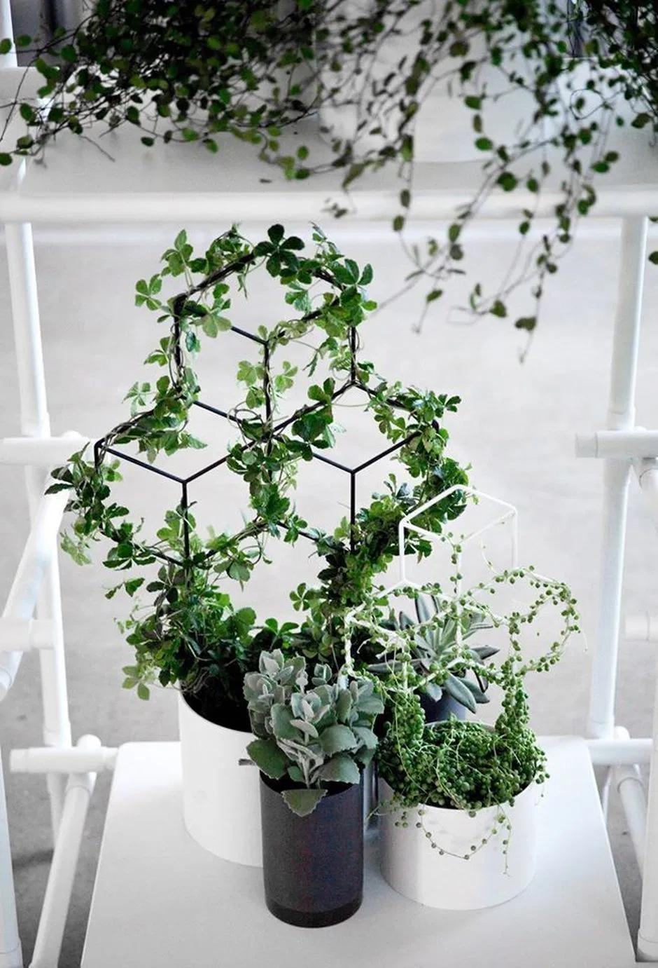 Marvelous Indoor Vines And Climbing Plants Decorations 2 Hoommy Com In 2020 Indoor Vines Ivy Plant Indoor Trellis Plants
