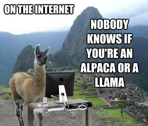 Pin By Ana Valentina Quiroga On Knit Crochet Quotes Llama Alpaca Funny Llama Jokes