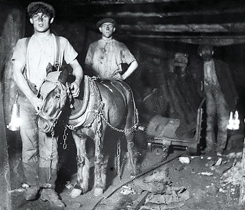 Pit Ponies, Pit Horses, pit pony history, miner Ceri Thompson