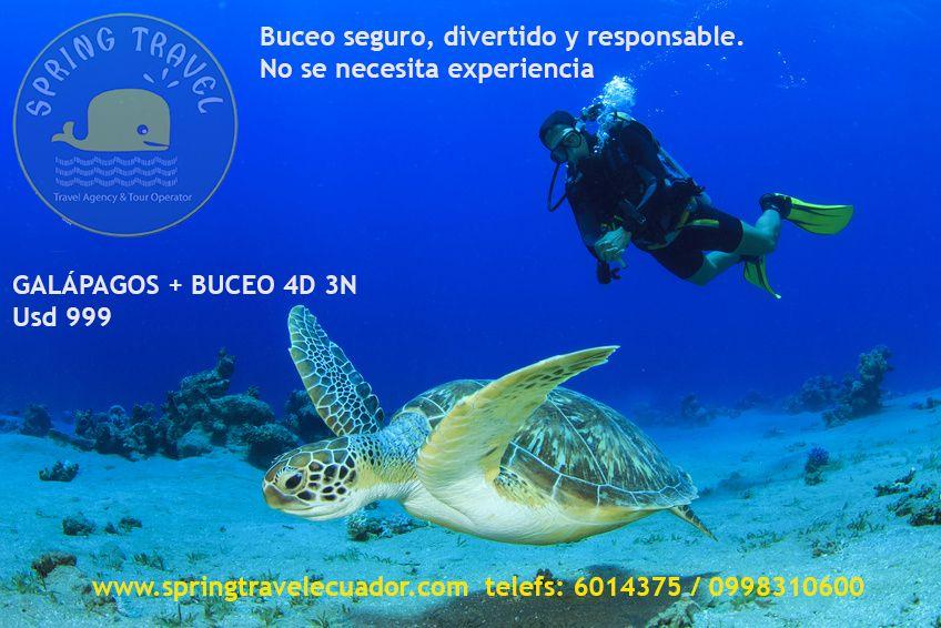 Buceos diarios en los Santuarios Marinos de Galapagos: GORDON ROCKS, SEYMOUR NORTH, MOQUERA, DAPHNE, SANTA FE, PLAZAS NORTE Y SUR, BEAGLE, GUY FAWKES, BAINBRIDGE, PUNTA CARRION, NAMELESS, COUSINS, BARTOLOME, FLOREANA ..…. , Salida: 07:00 Regreso: 15:00 - See more at: http://www.springtravelecuador.com/es/galapagos/349-galapagos-buceo-4d-3n#sthash.YsOkewMU.dpuf