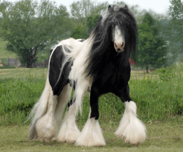 Ahnliches Foto Clydesdale Pferde Schonste Pferde Pferde