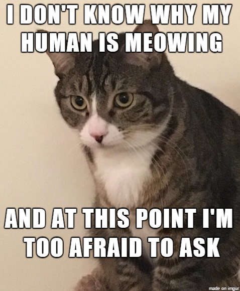 Confused Cat Meme Funny cats, Cat memes, Funny animal memes