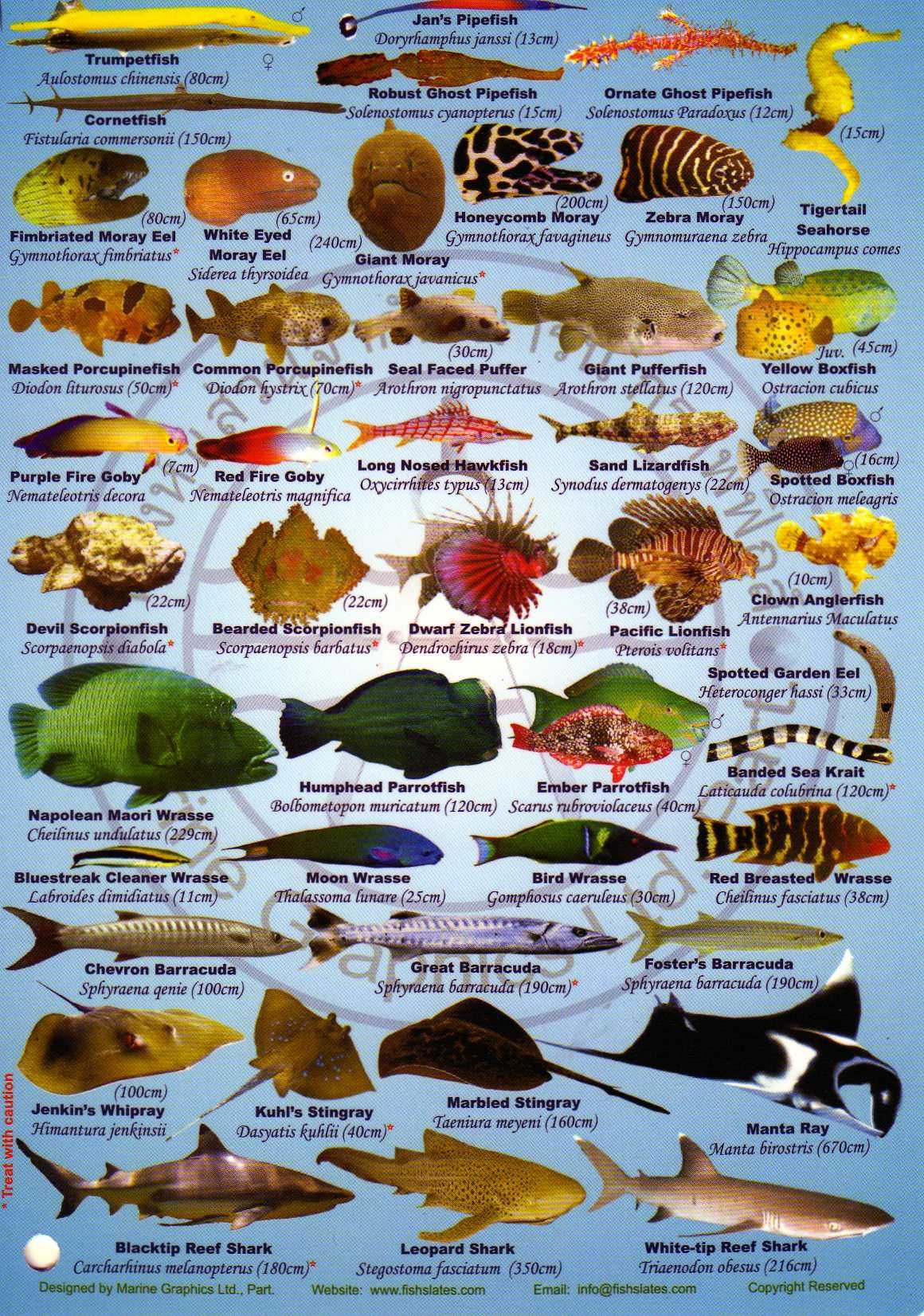Saltwater Fish Identifier