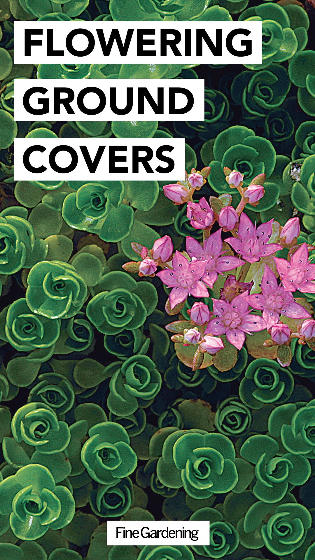 Perennial Ground Cover Full Sun: Flowering Ground Covers (With Images)