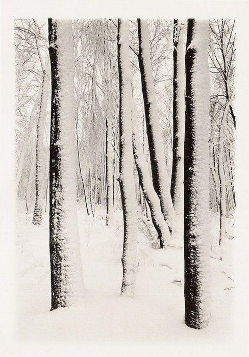 Tom Zetterstrom, Black Birches, Canaan, Connecticut, 1977