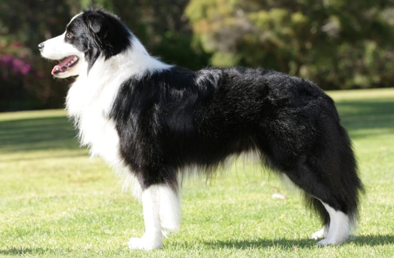 7 Dog Breeds Not Popular In India But Immensely Popular Worldwide