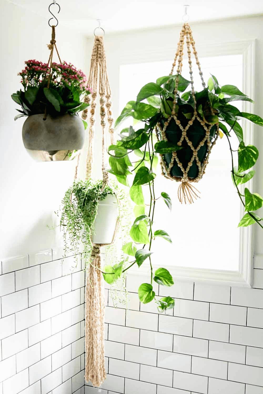 Hanging Plant Bathroom Small Spaces Bathroom Plants Hanging