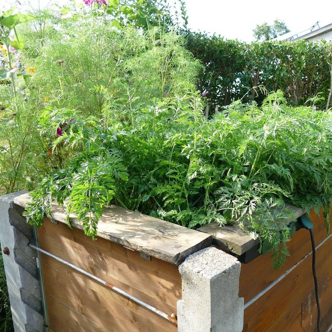 Zweites Jahr Mit Unserem Hochbeet Gebaut Aus Einem Kompost Mit Betonpfosten Und Schaltafeln Verkleidet Mit Einer Luftdurchlassigen Folie Aufbau Von U Bitki