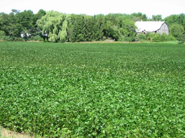 cotton field   Southern colonies