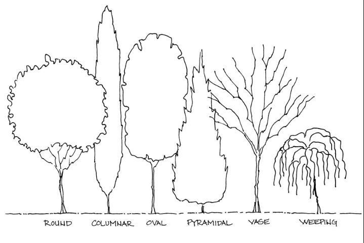 Basic Principles Of Landscape Design Figure 6 Tree Forms Landscape Design Landscape Tree