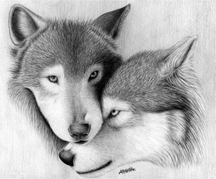 Картинки волка и волчицы вместе карандашом