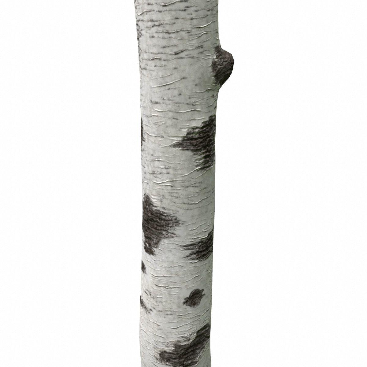 Birch Tree Trunk 3D Obj - 3D Model