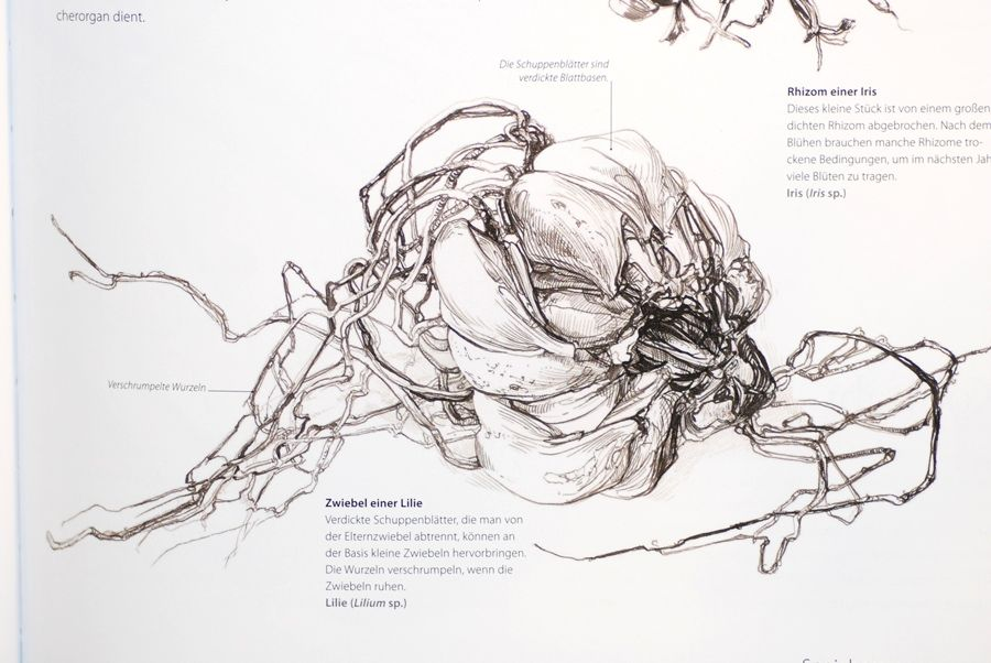 Сара Симблет: Ботаника для художников | Botany, Artist and Botanical ...