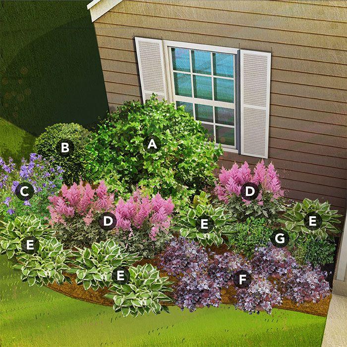 shade garden plan for mountain region featuring Oregon grapeholly