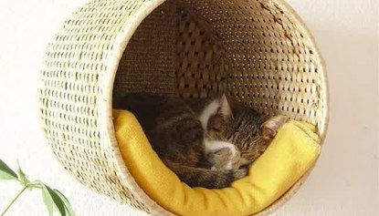 25 Indoor Cat Tree Ideas For Play And Relax   Home Design And Interior