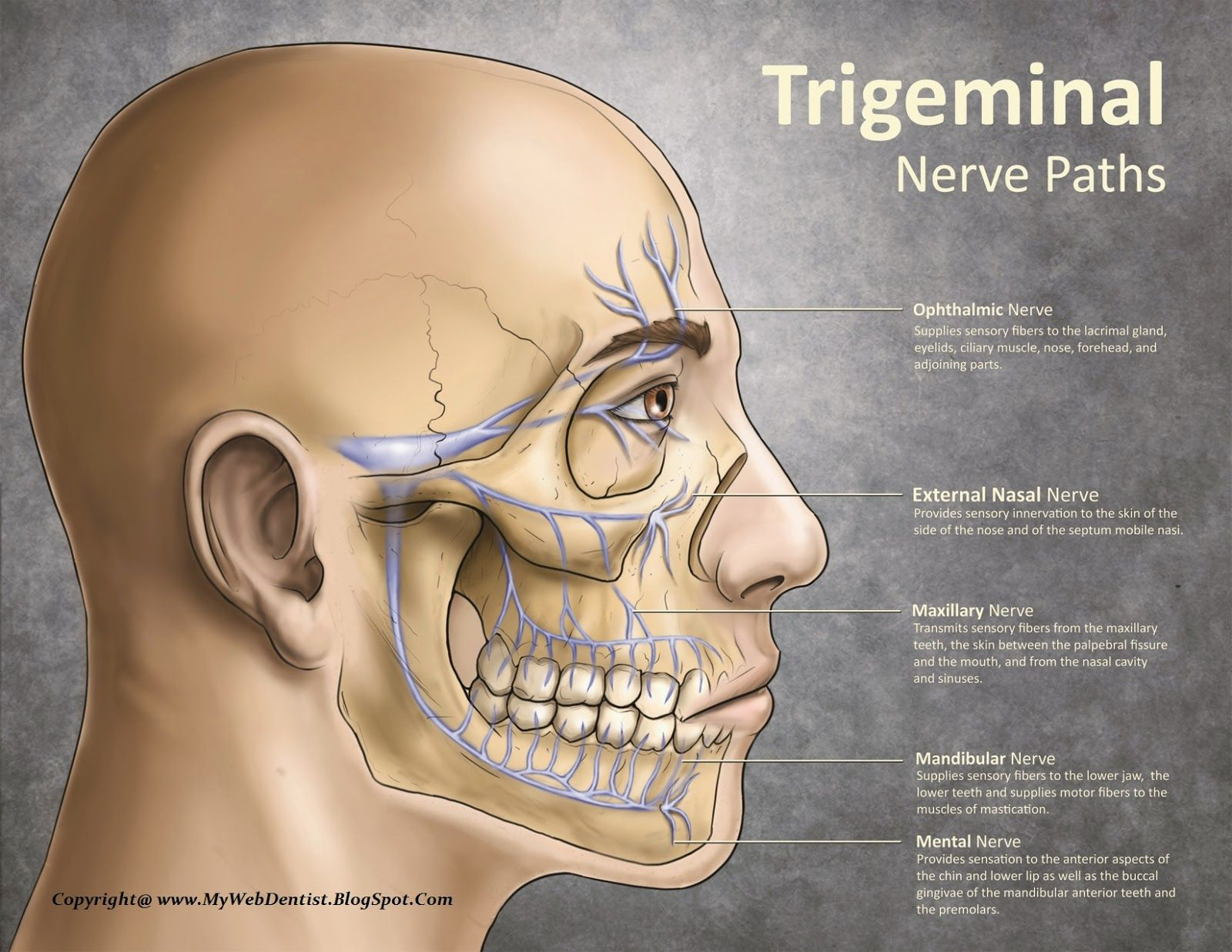 Trigeminal Nerve Visualization For People Having Difficulty Chewing