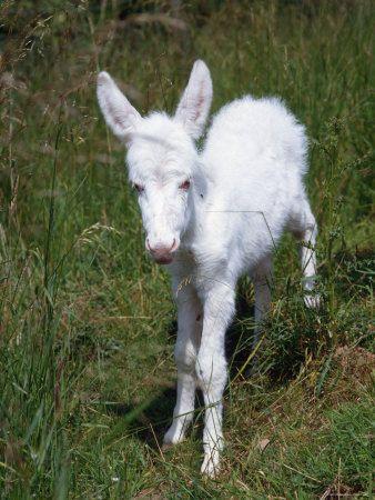 40 Amazing Albino Animals Pictures Seltene Tiere Tiere Und