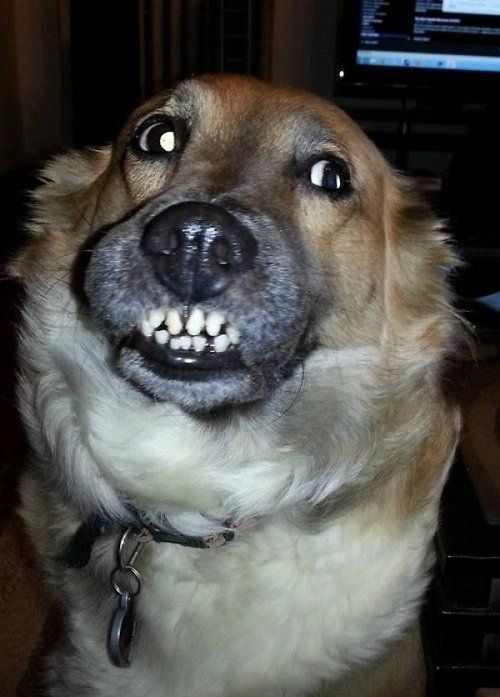 ADORABLY FUNNY DOGS!!!! CLICK THE LINK!!!!!!!!!!!!! DO IT!!!!!