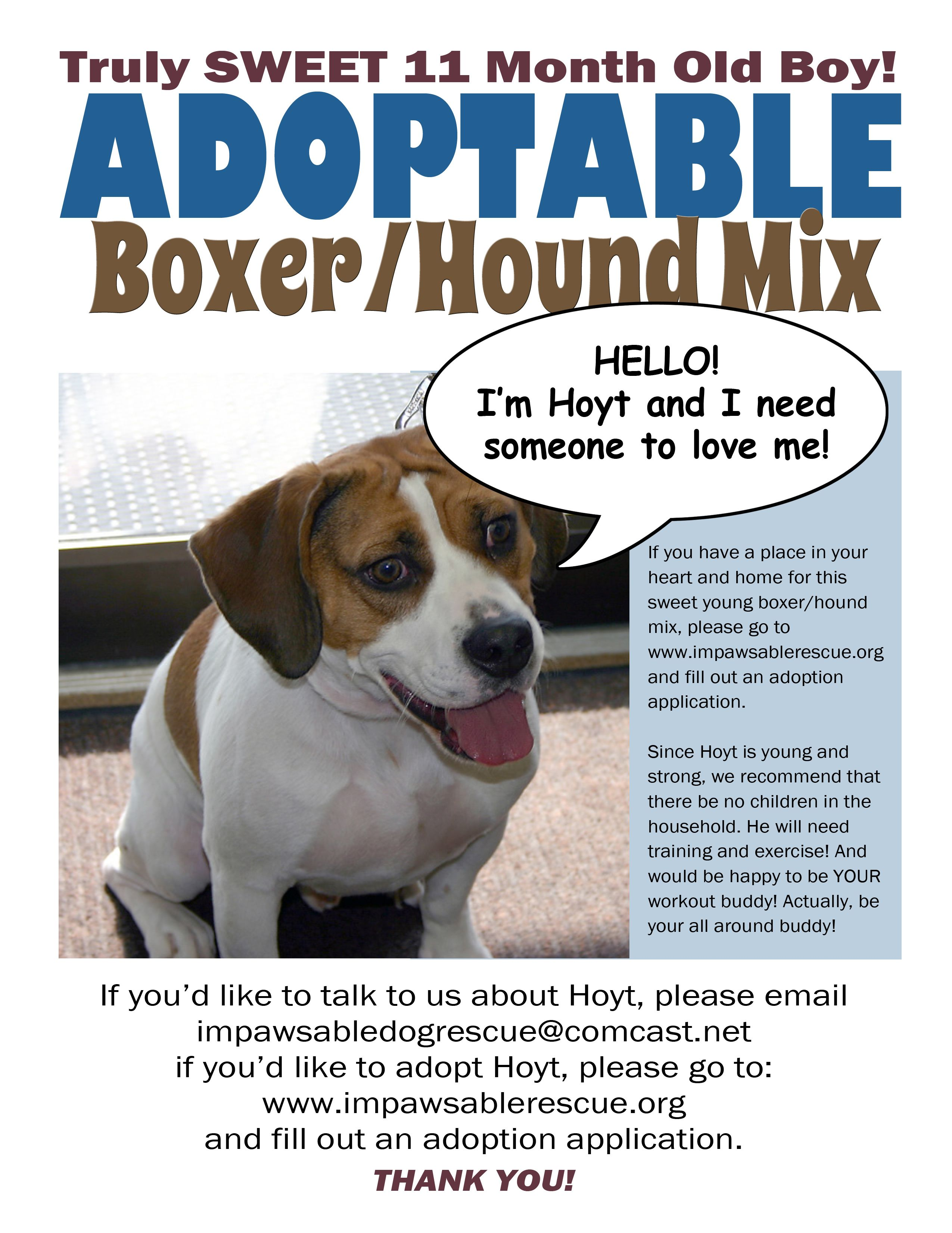 Hoyt Was An Owner Surrendered 13 Month Old Beagle Pup Who Is