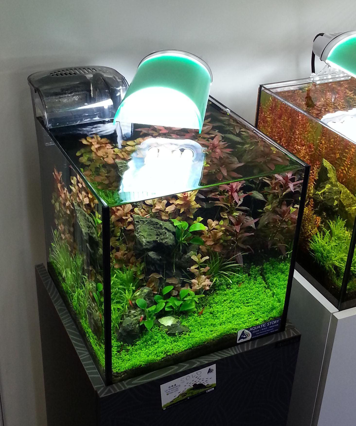 Xz s 3ft High tech low tech nano experiments The Planted Tank