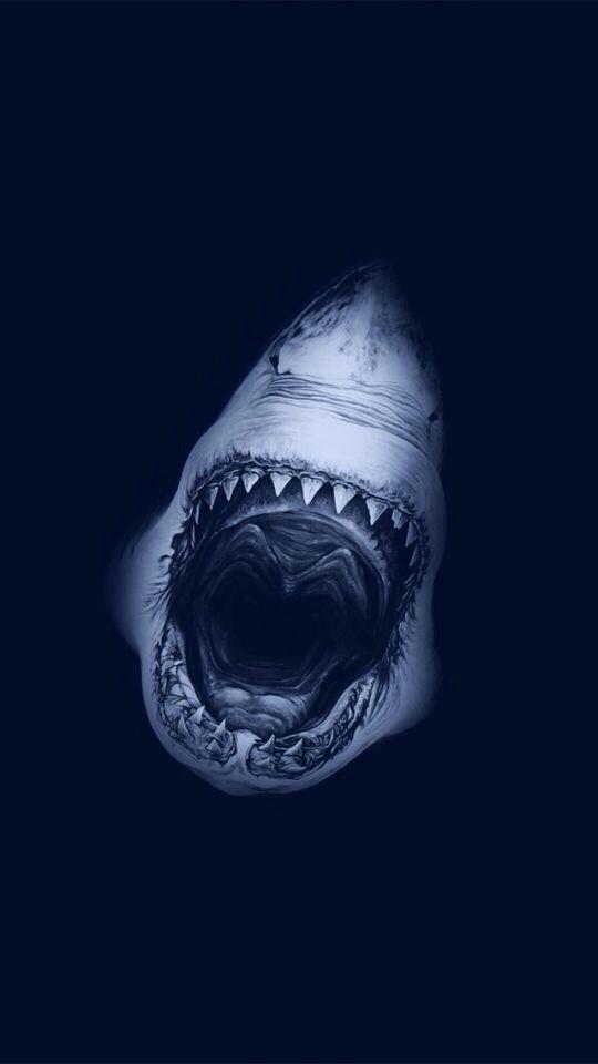 """Prachtige foto van een haai. Deze link ik aan de film """"Soul surfer"""" omdat de haai een arm afbeet van een meisje die ondanks haar handicap hierdoor toch surfer op hoog niveau werd."""