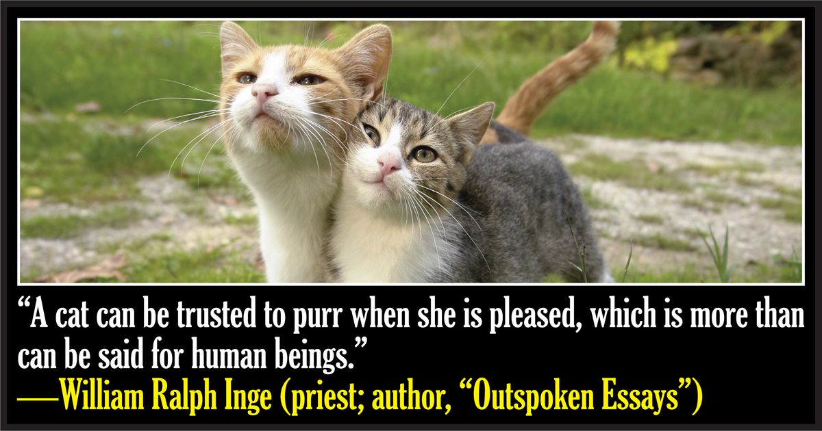 50 Famous Quotes About Cats Cute cat quotes, Cat quotes